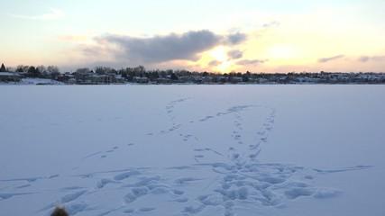 Playful Dog On Frozen Lake