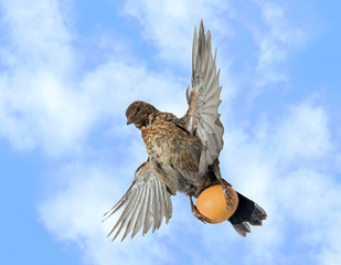 bird flies with an egg in its talons