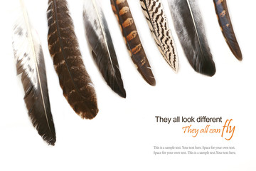 various feathers isolated on white background, sample text