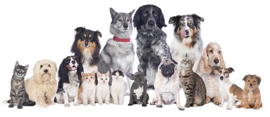 Hunde und Katzen Gruppe