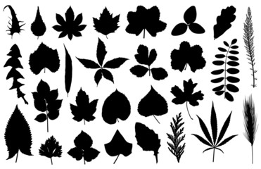 Set of different leaves isolated on white