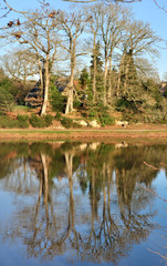 reflets d'arbres dans l'eau