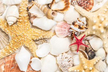 Close-up of seashells texture