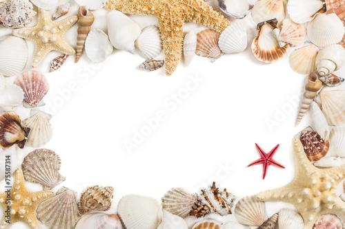 Papiers peints Flore aquatique Seashells frame. Isolated on white background.