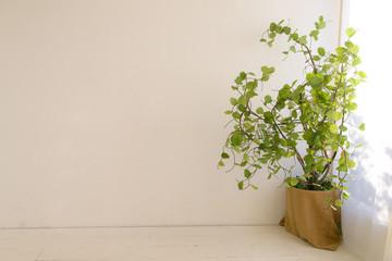 植物と部屋