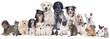 Große Hunde und Katzengruppe - 75588923