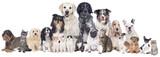 Duże psy i grupa kotów