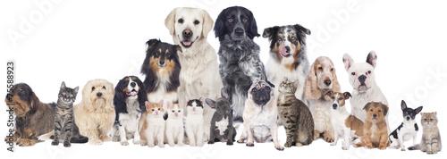 Foto op Canvas Hond Große Hunde und Katzengruppe