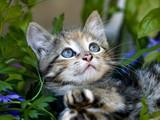Gatito en jardin.