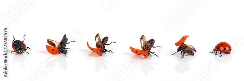Leinwandbild Motiv Stehauf-Käferchen