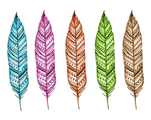 Decorative hand drawn bright feathers