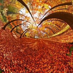 Herbstwald_2_littleplanet