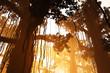 Mysterious Deep Jungle in the Sunset Sunrise 3D artwork