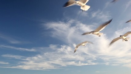 Flock of seagulls in the blue sky