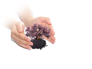 Conceptual tree or plant in woman hands