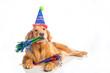 Dog Birthday Party - 75605715
