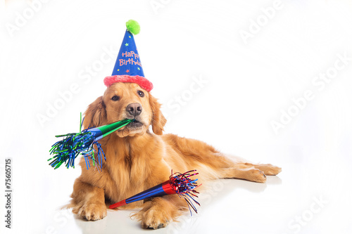 Papiers peints Chien Dog Birthday Party