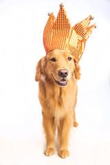 Jester Dog