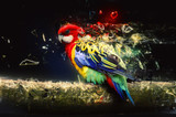 Fototapeta Parrot on the branch, abstract animal concept