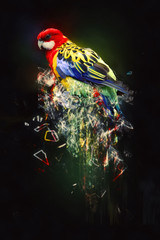Parrot, abstract animal concept © PureSolution