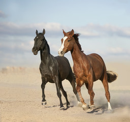 Black and chestnut horses in desert