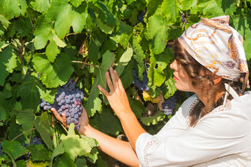 Young woman, vine grower, in the vineyard.