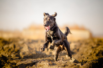 Portrait of running mixed breed dog