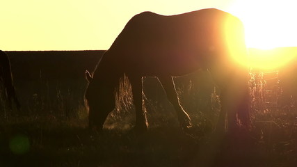 Pasture at Sunset