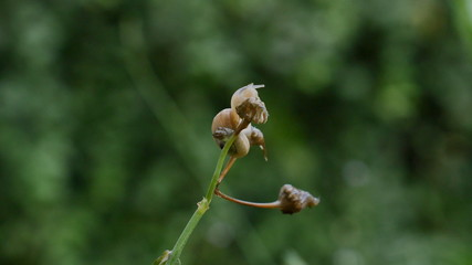litle snail in grass 4k