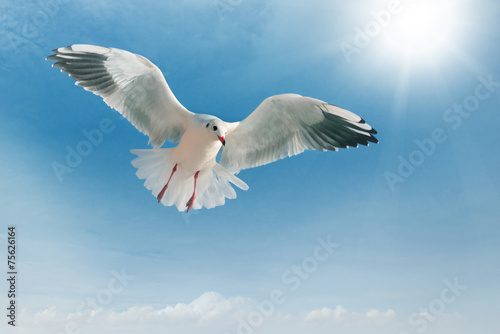 Fotobehang seagull in flight against the blue sky