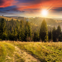 coniferous forest on a  mountain top at sunset