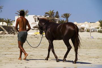 cavallo in spiaggia