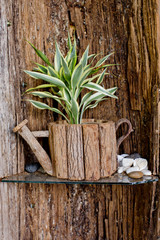 Small tree is in wooden flowerpot with wooden background.