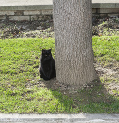 Black cat sitting in a park