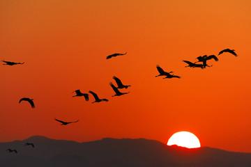 日の出と鶴