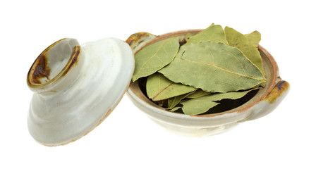 Bowl of basil leaves with lid