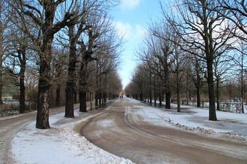 Allee im Winter mit Schnee