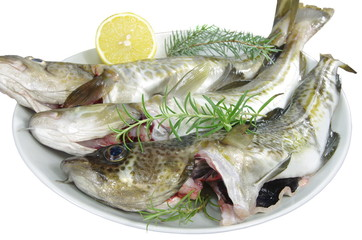 raw fishes