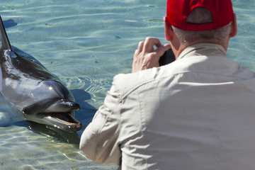 Dolphin in captivity
