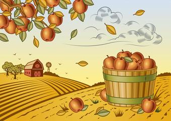 Apple harvest landscape