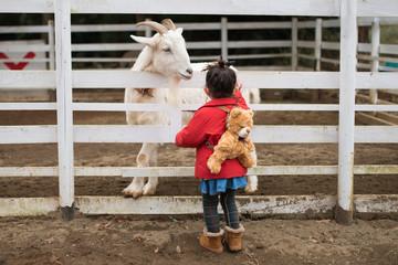 ヤギと遊ぶ少女