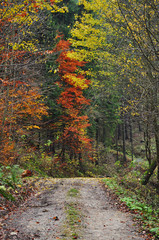 Forest path autumn scenic