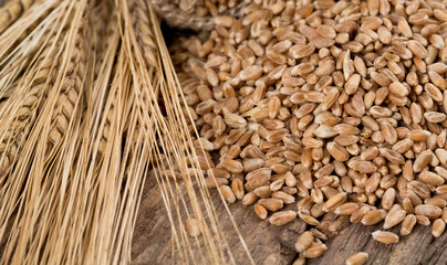 barley on wooden surface