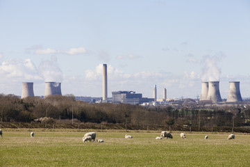 Herd of sheep on a meadow. Didcot coal fired power station in the background.