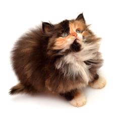 Little yellow-gray kitten