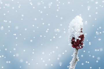 Bedeckte Knospe bei Schneefall