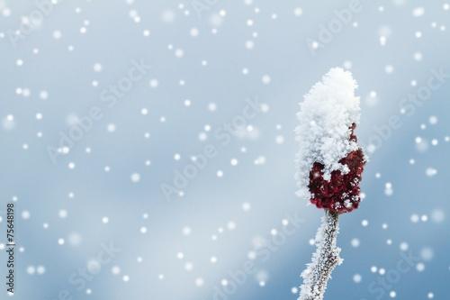 canvas print picture Bedeckte Knospe bei Schneefall