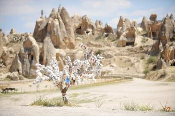 Cappadocia wish tree