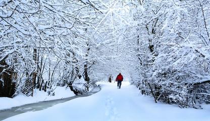 ağaçlar altında kış gezileri