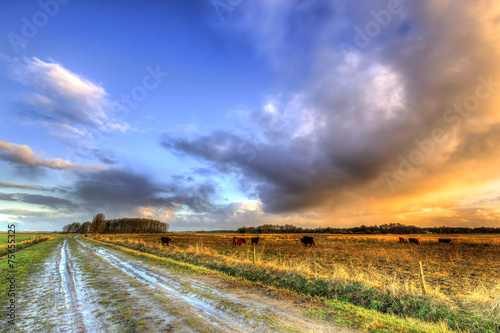 Muddy wet sand lane in grassland landscape - 75655325